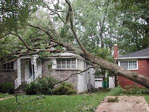 Tree Fell On Roof In Storm